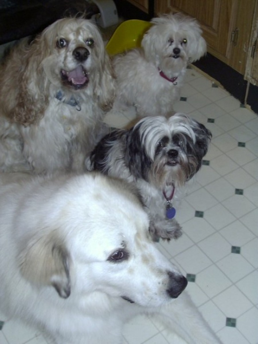 Riley, Freddie, Teddy and Waco