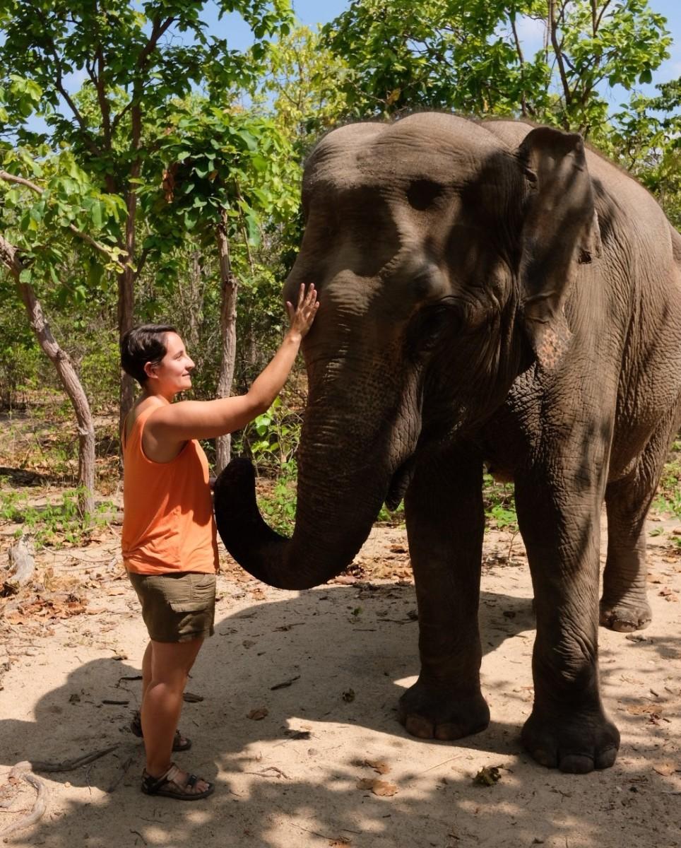 Meeting one of Pnomh Tamao's elephants