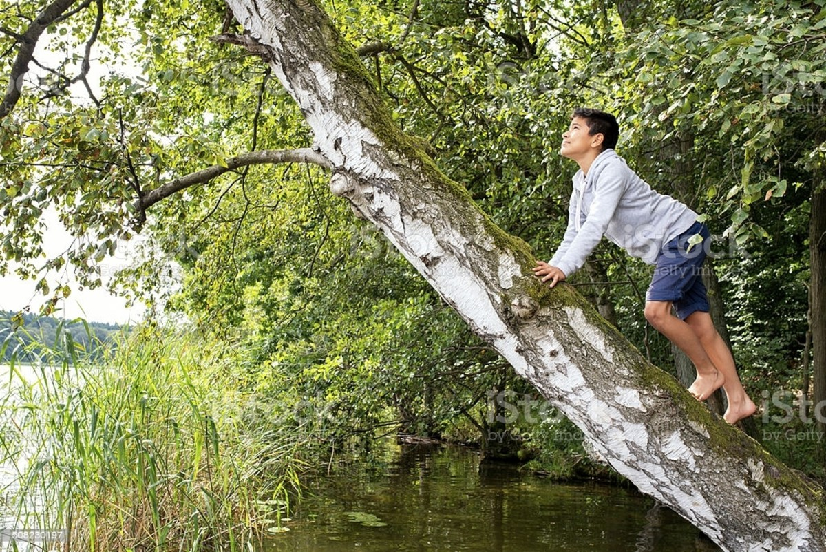 The goal about tree-climbing is to be patient, safe and get to the highest limb.