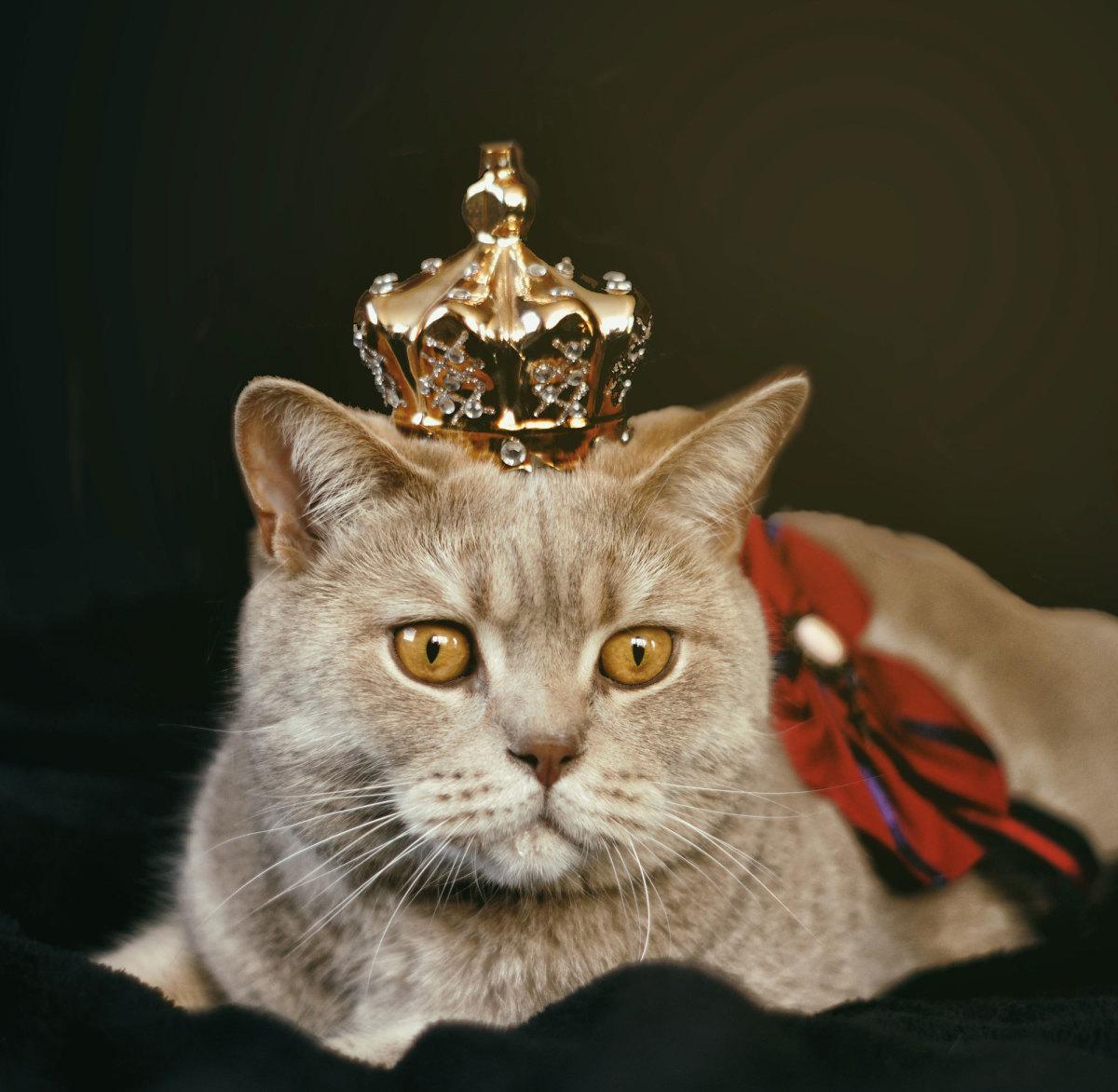 Elvis is sitting on his throne.