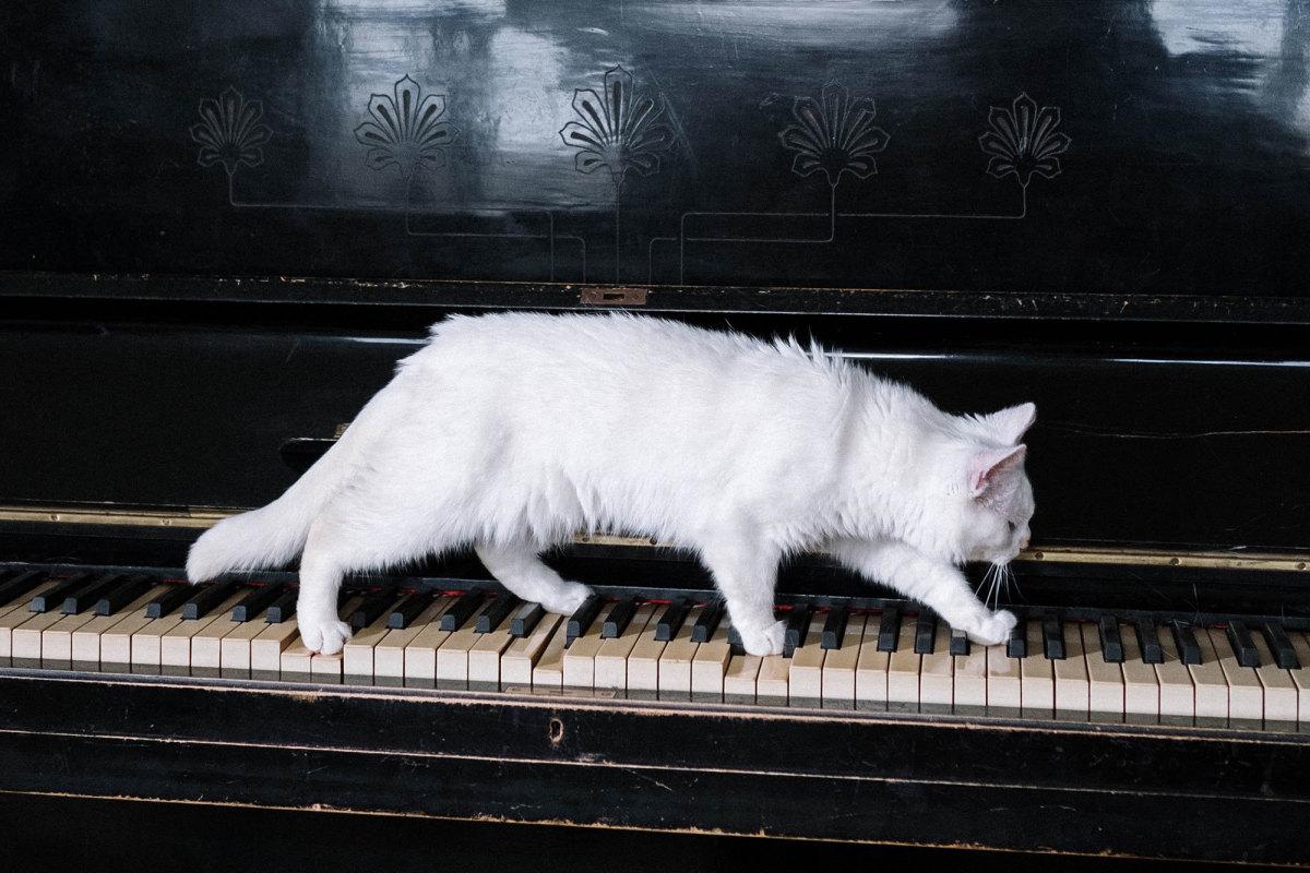Elton John is back on the piano again.