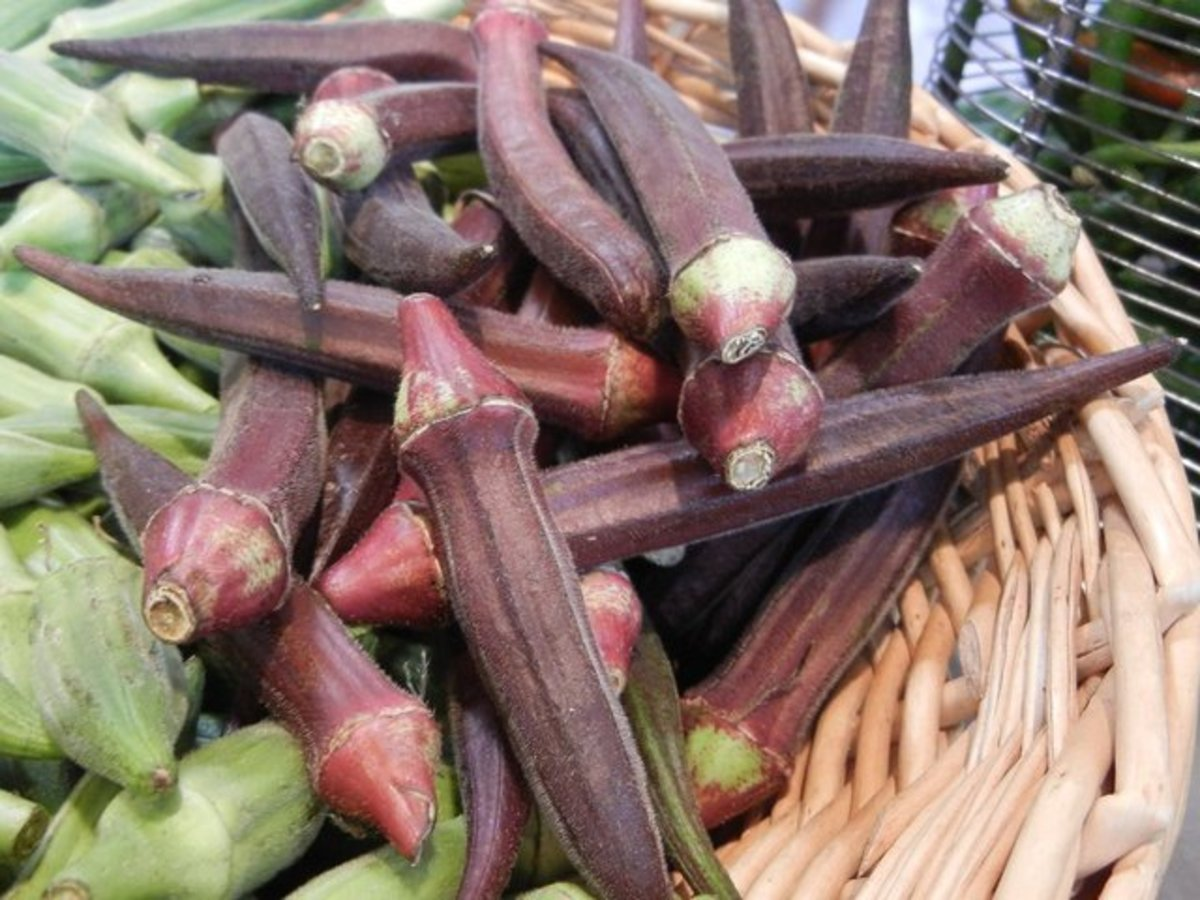 I really like the red pod variety of okra and really enjoy making my Gumbo with it. You can grow both varieties in your garden as long as you have 50 foot between the two varieties. If you don't they will cross.