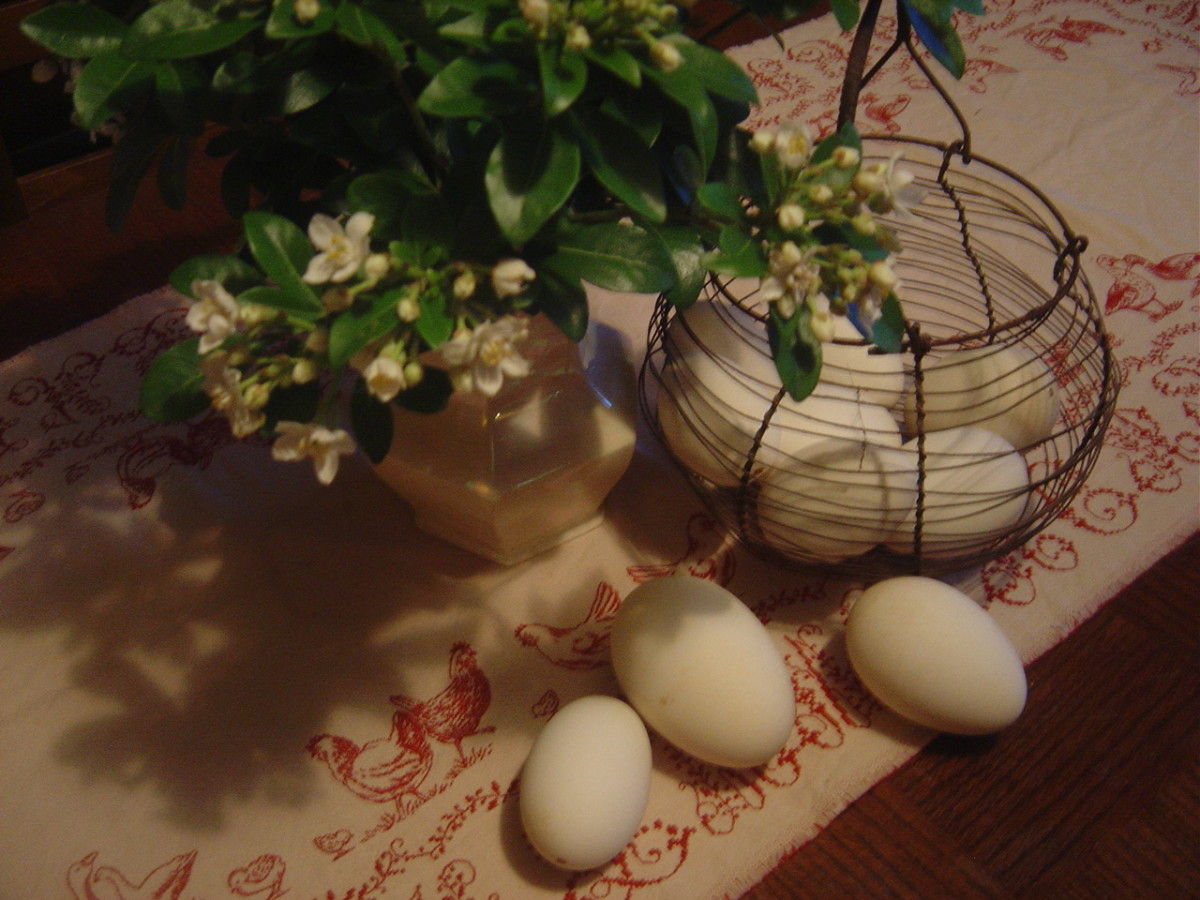 These beautiful, large, white goose eggs are perfect for decorating