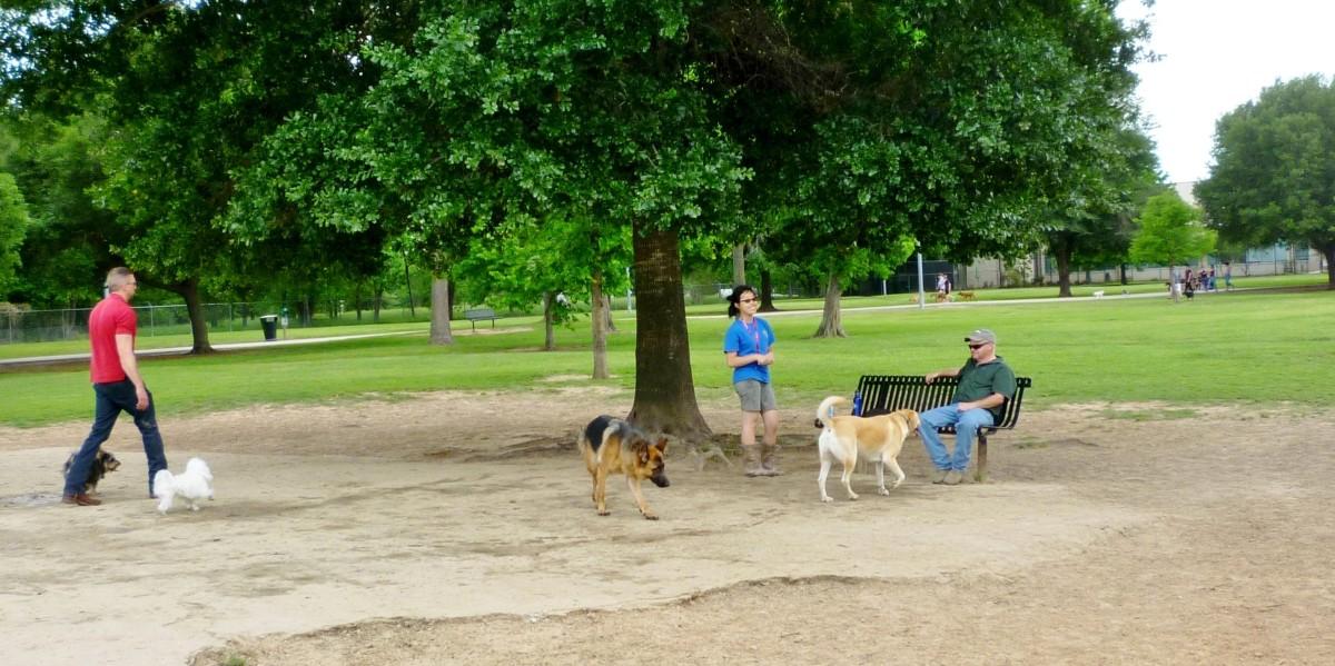 Fun in the Dog Park