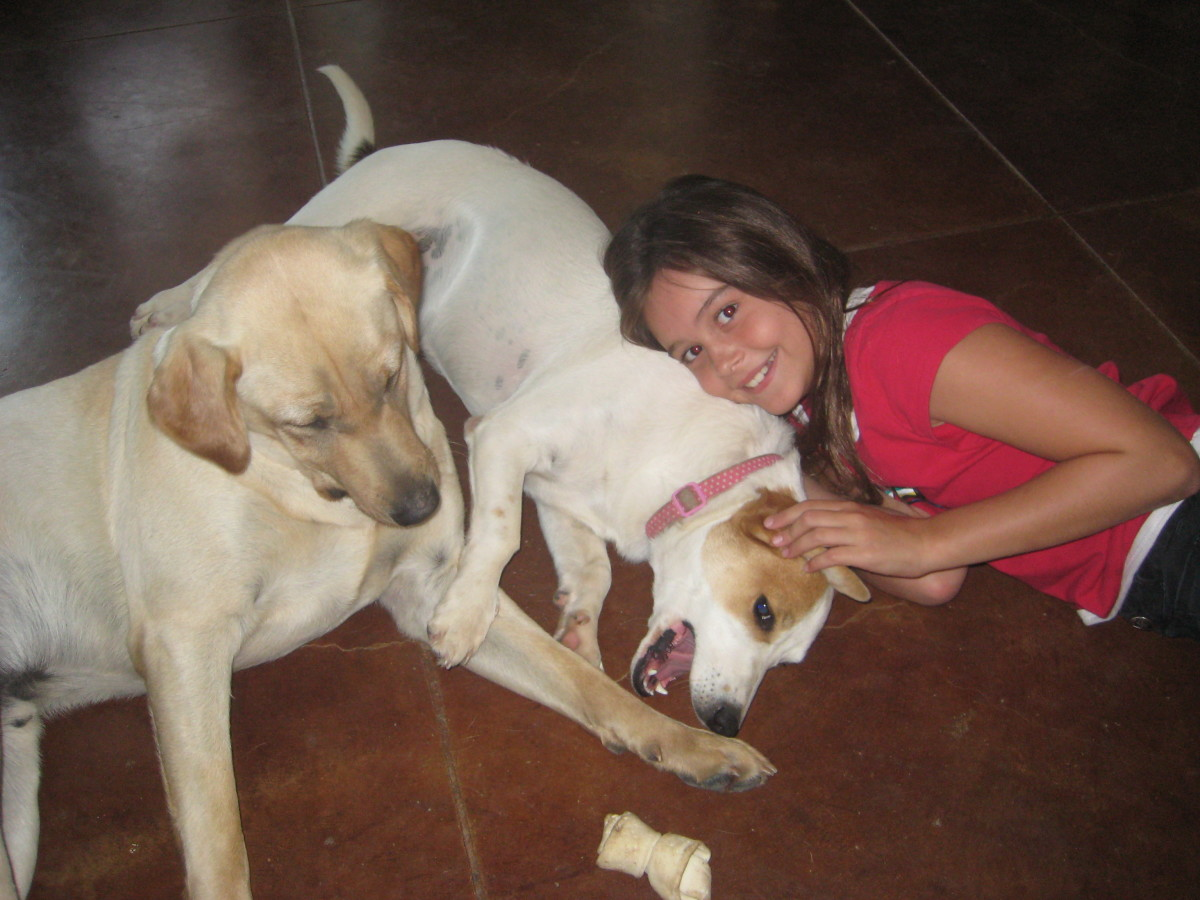 My daughter with our current dogs, Charlie and Jessi. We put these dogs on Program when they were puppies, and they've never had fleas. Our dogs are flea-free, pesticide-free and safe to snuggle with!