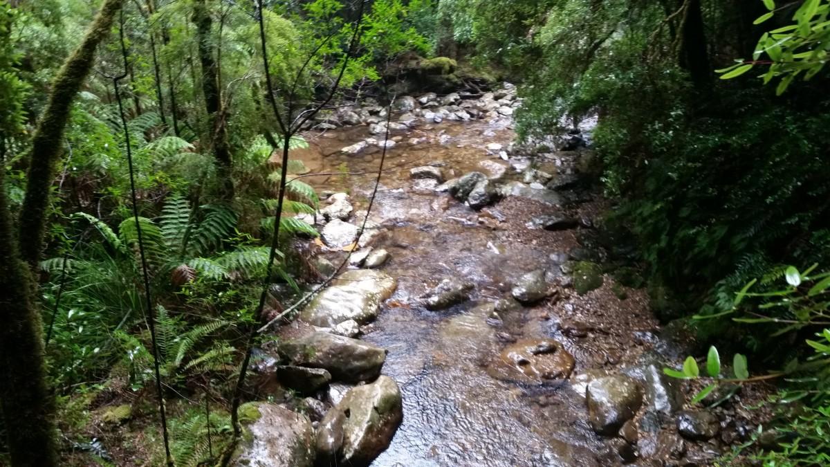 Watercourse in Tasmania