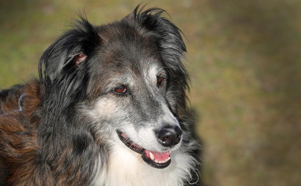 UTIs are common in older dogs, especially female dogs