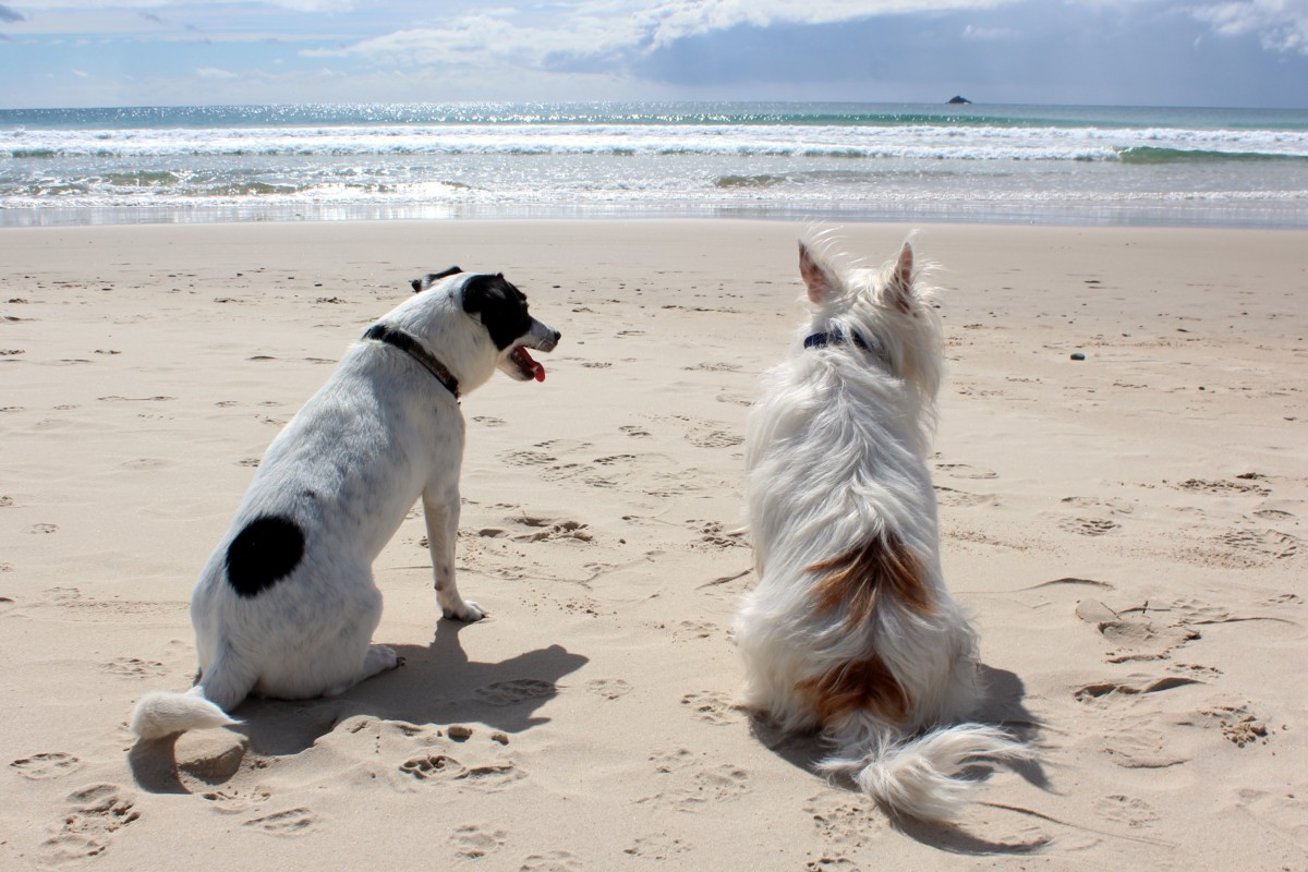 Prostate problems are found in unneutered male dogs, but are usually not life threatening
