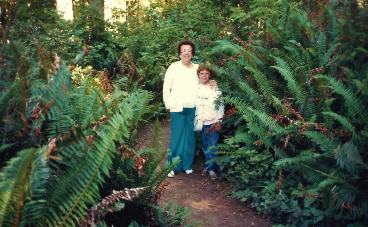 Look at the size of the ferns in the Redwood forest!
