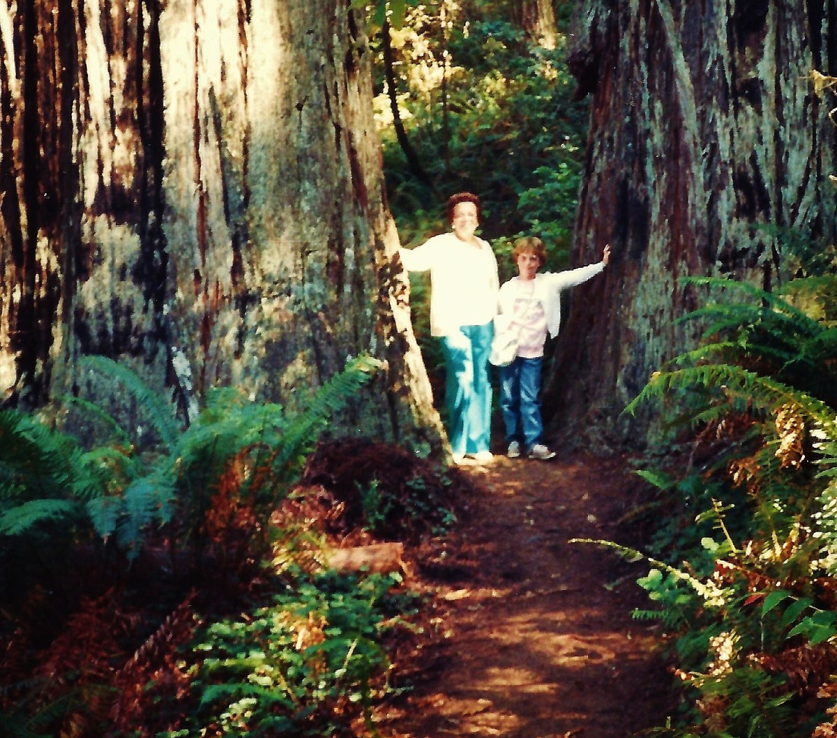 My mother and niece in the Redwoods