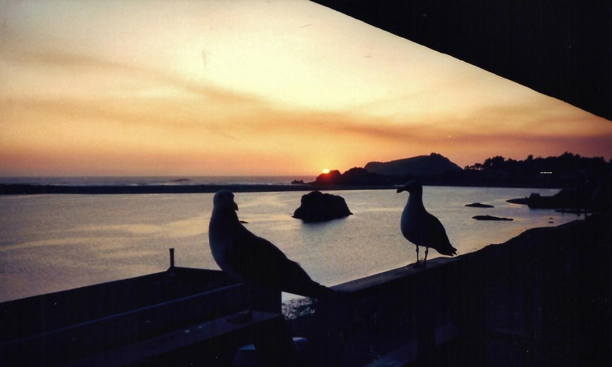Seagulls on our balcony railing.