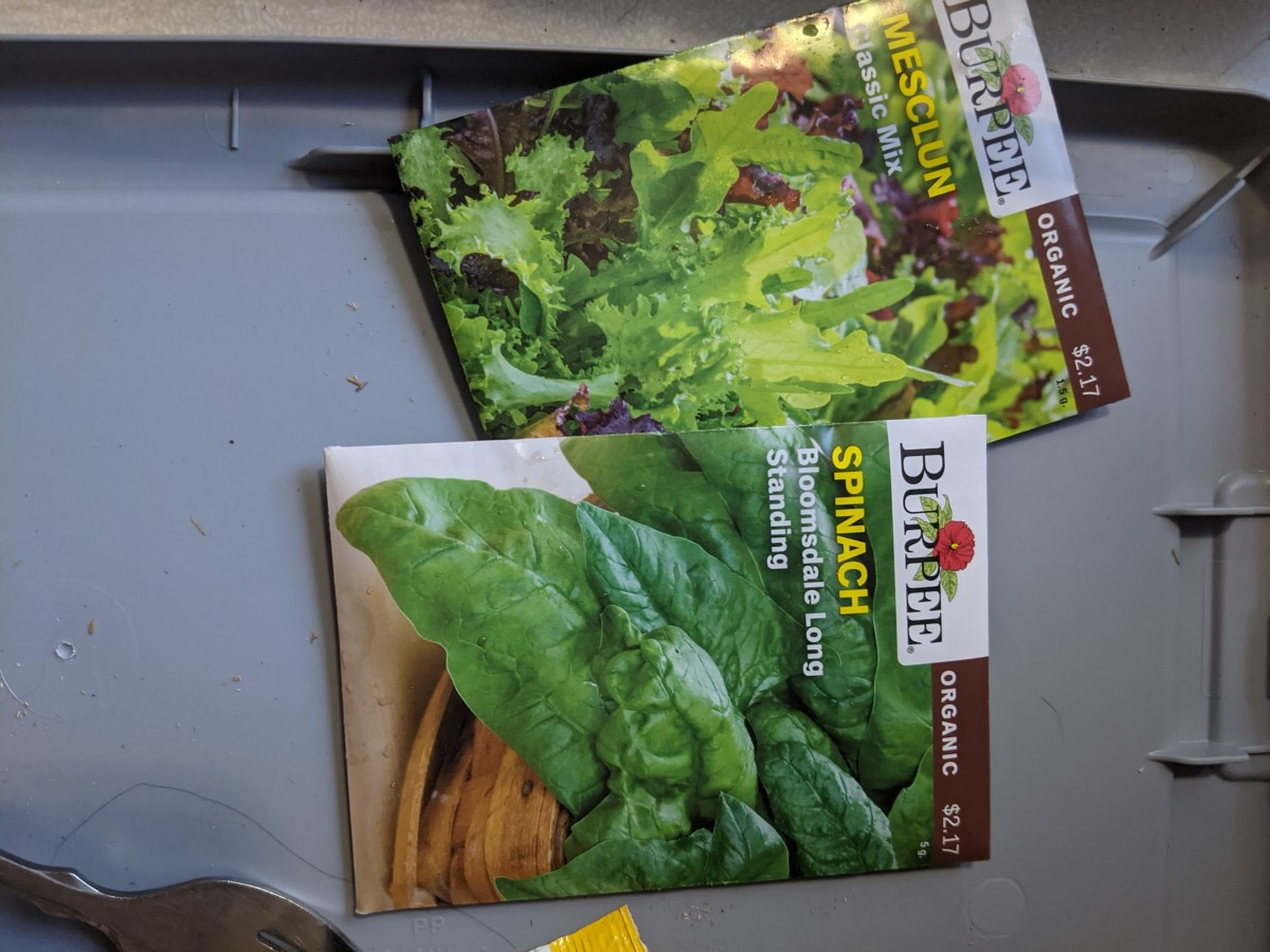 fingertips-salad-growing-meclun-and-spinach