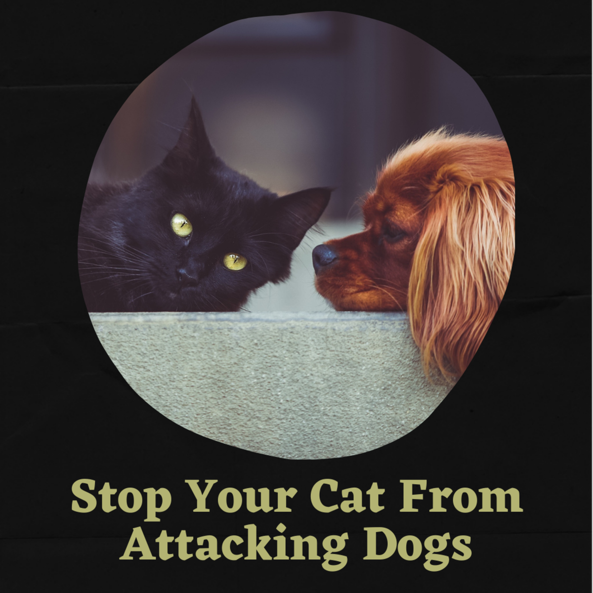 My cat hates my dog—what can I do about it?