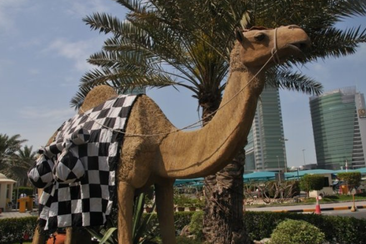 Camel at Formula One Grand Prix