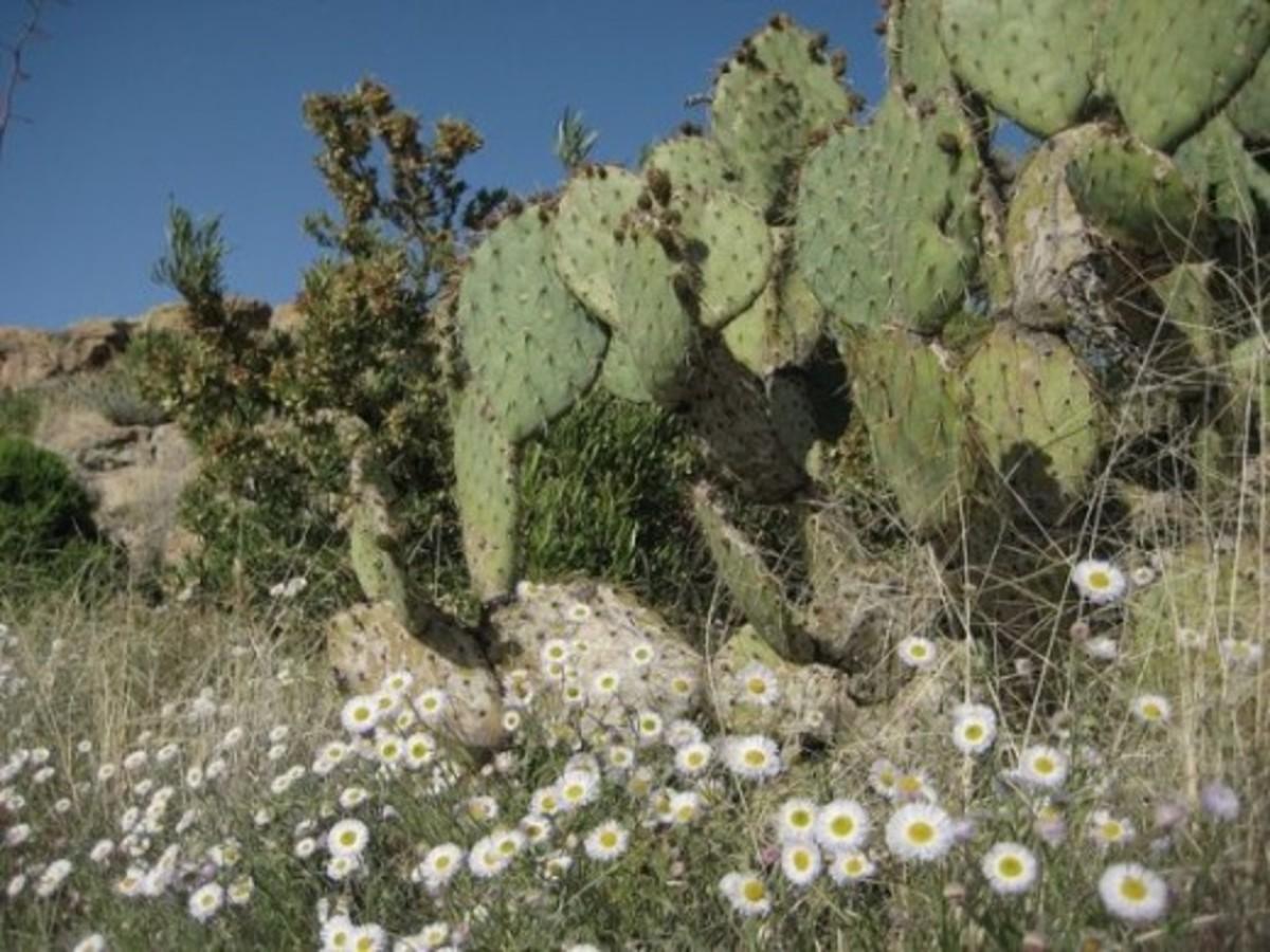 Springtime in Phoenix, Arizona