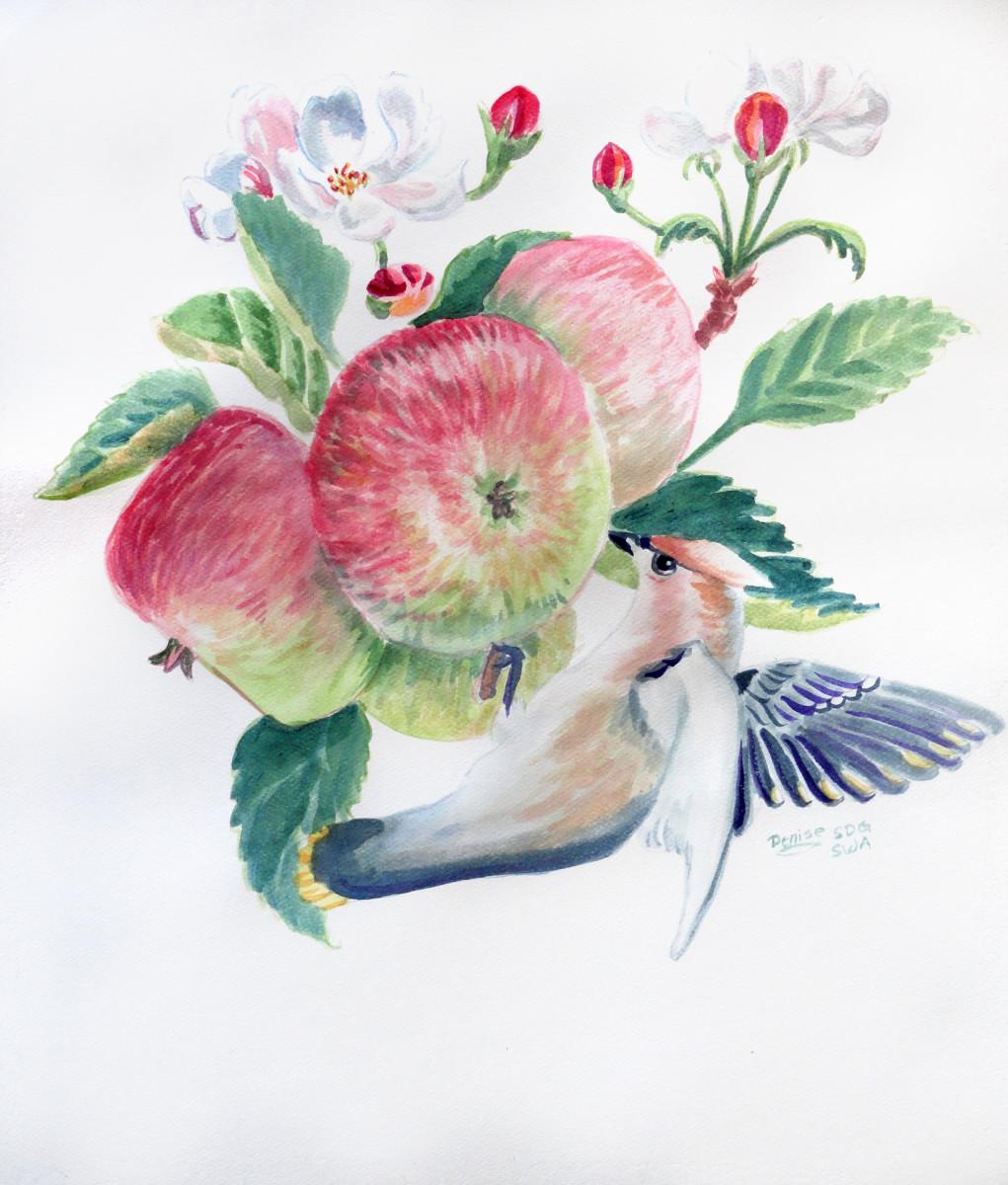 Cedar Waxwing and Apples in watercolor