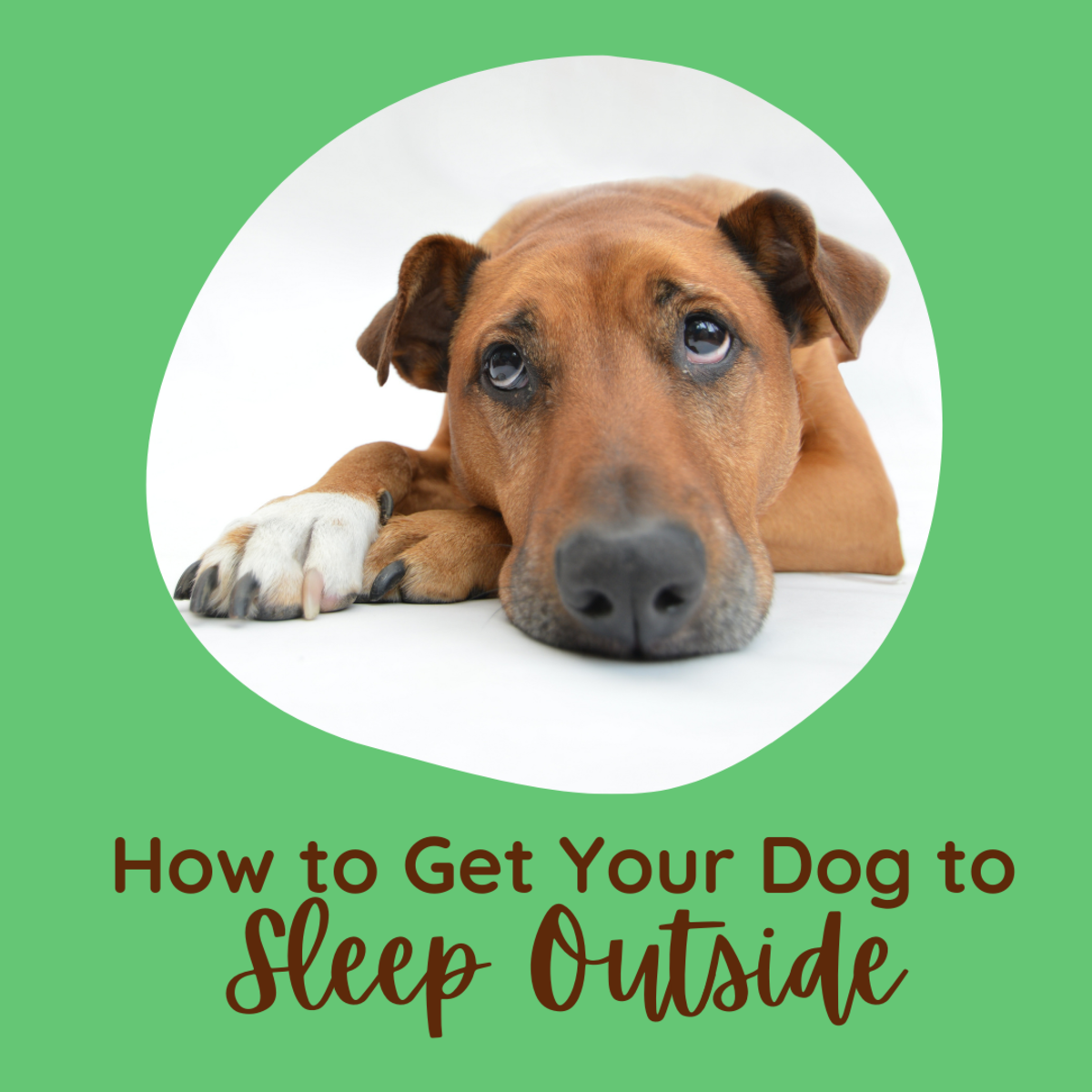 Train your dog to sleep outside