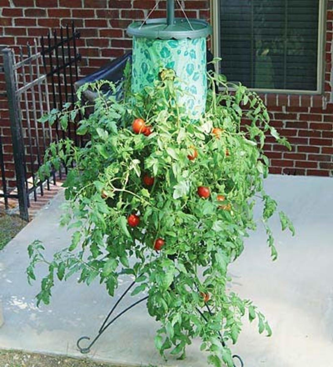 Grow your own fruit and vegetables - Upside down gardening ...