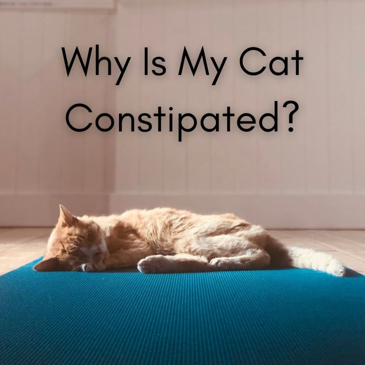 Constipation in cats is a pretty common scenario, especially for obese, middle-aged, and senior cats.