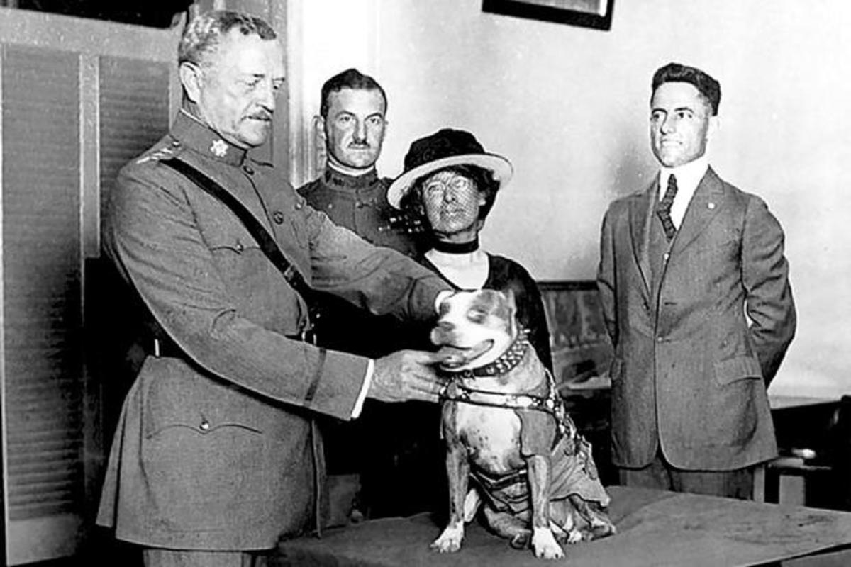 Sergeant Stubby getting a medal from General John Pershing