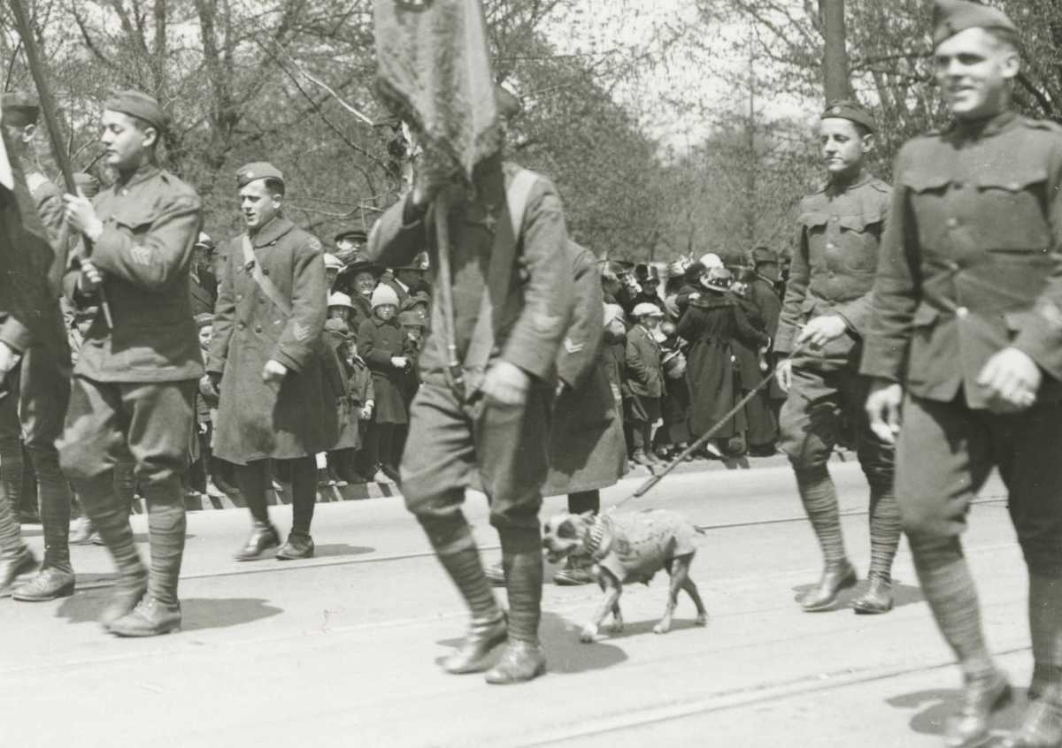 Sergeant Stubby marching with troops during a victory parade
