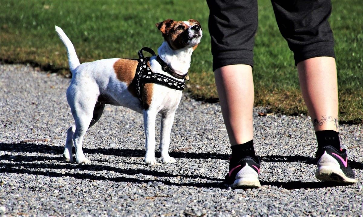 5-useful-tips-to-stop-your-dog-from-nipping-or-biting