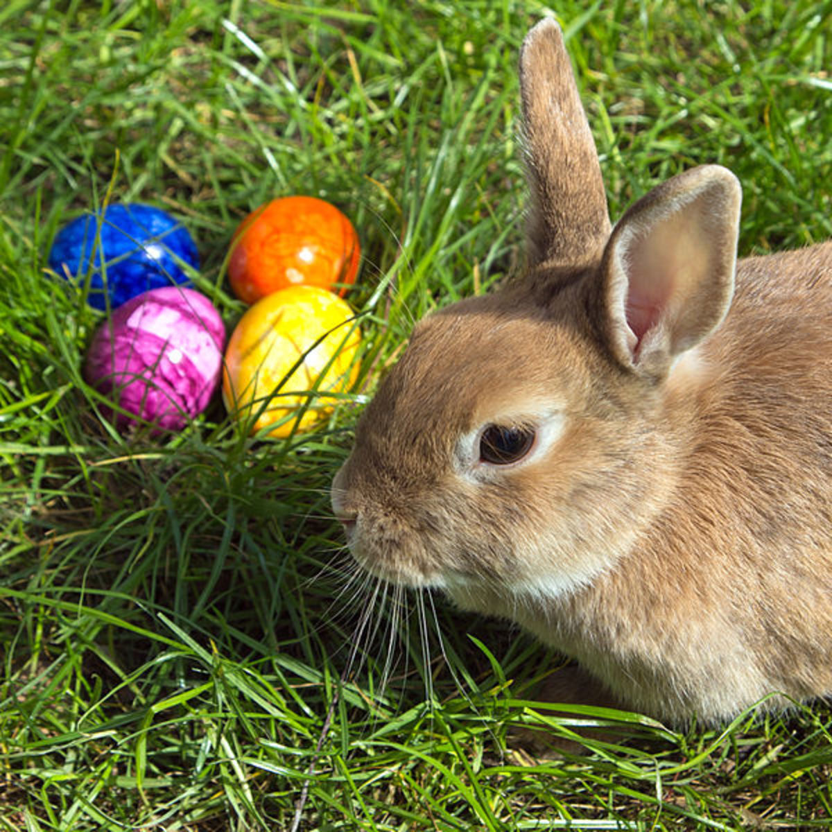 Easter Bunny and Colored Eggs - Traditions and Origins