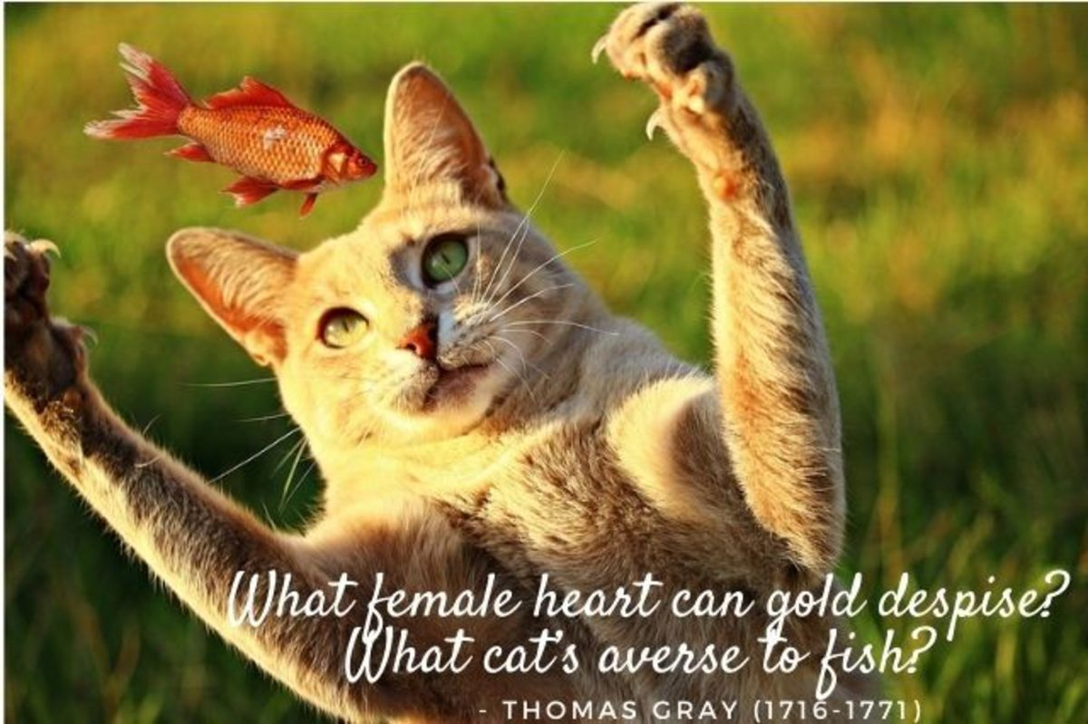 cat-quotes-and-sayings