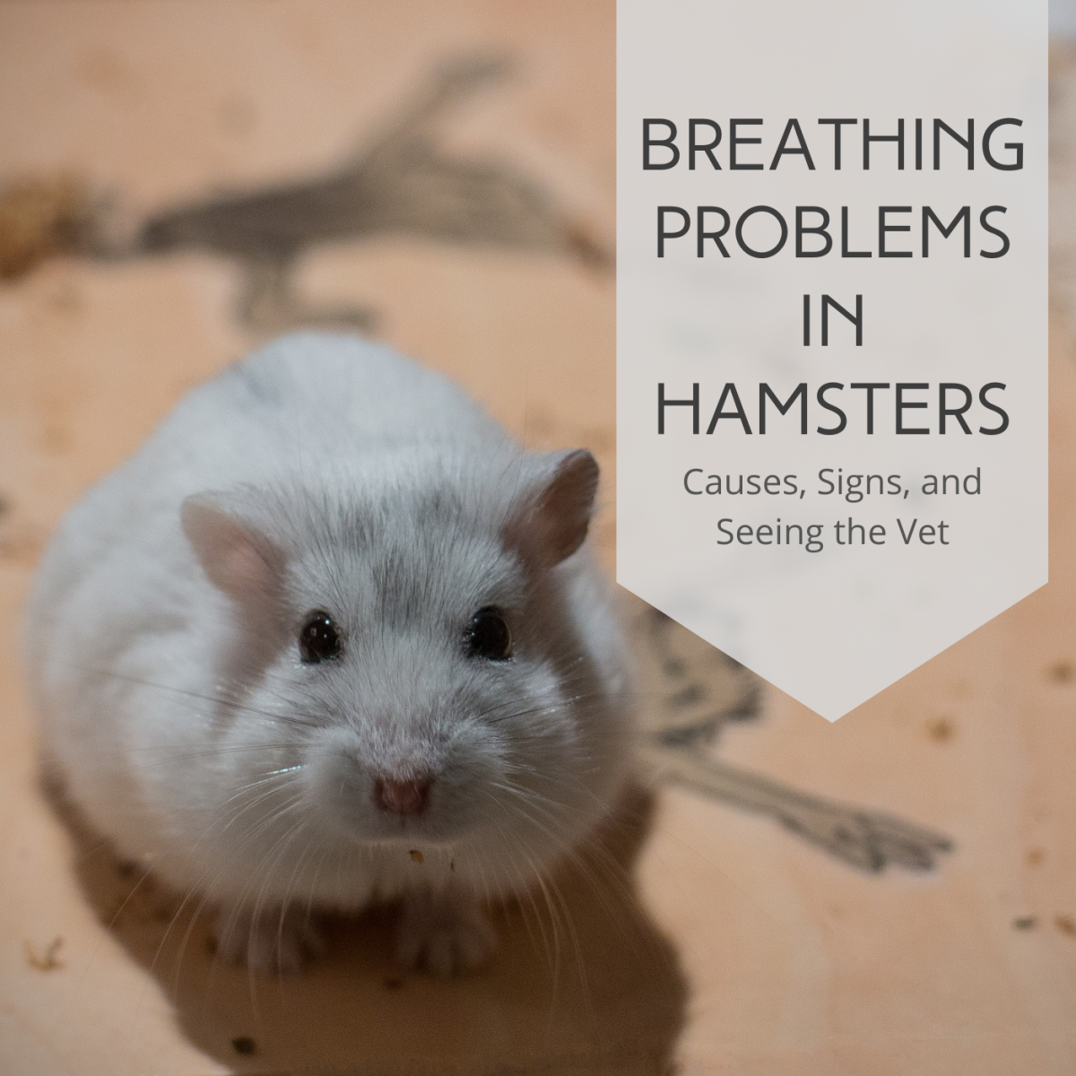 Hamster Breathing Fast and Heavy? Respiratory Infection Info