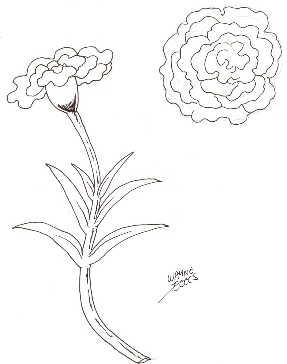 Flower Drawing, inked flower art by Wayne Tully.