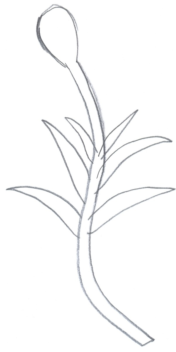 Learn to draw a flower.
