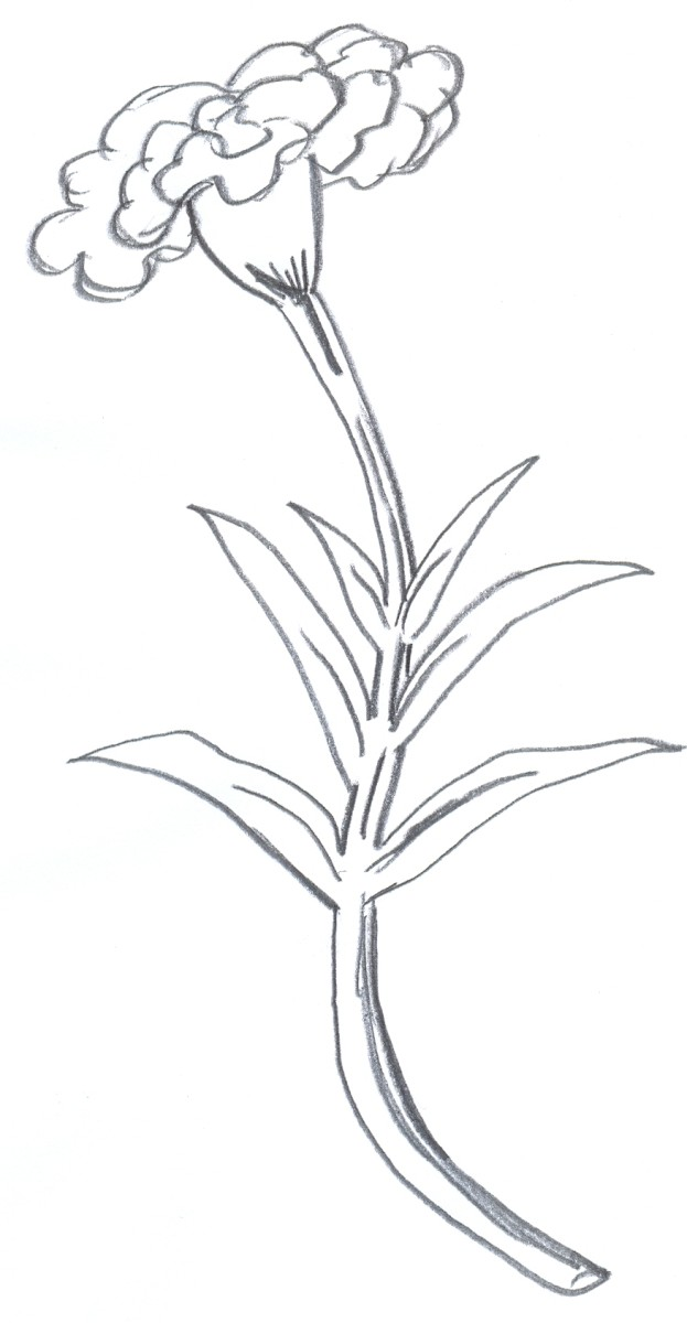 pictures of flowers to draw. How to draw a flower, further drawing.