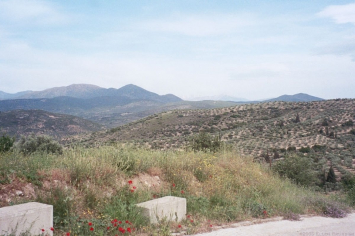 The Mycenaean countryside: lonely and gusty and sweet with orange blossoms.
