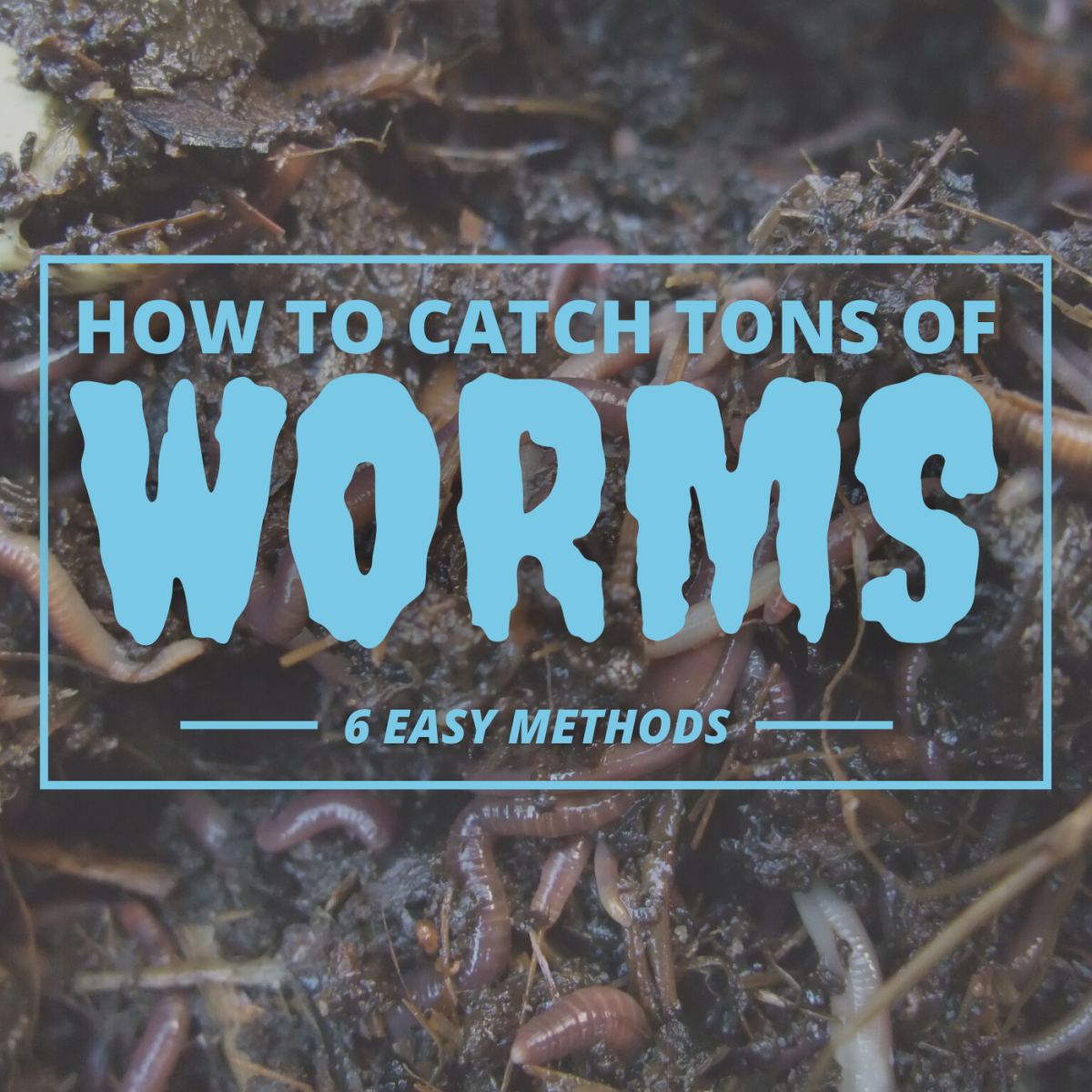 Whether you're looking to save money on fish bait or collect worms to farm or sell, the methods discussed here can help you get started.
