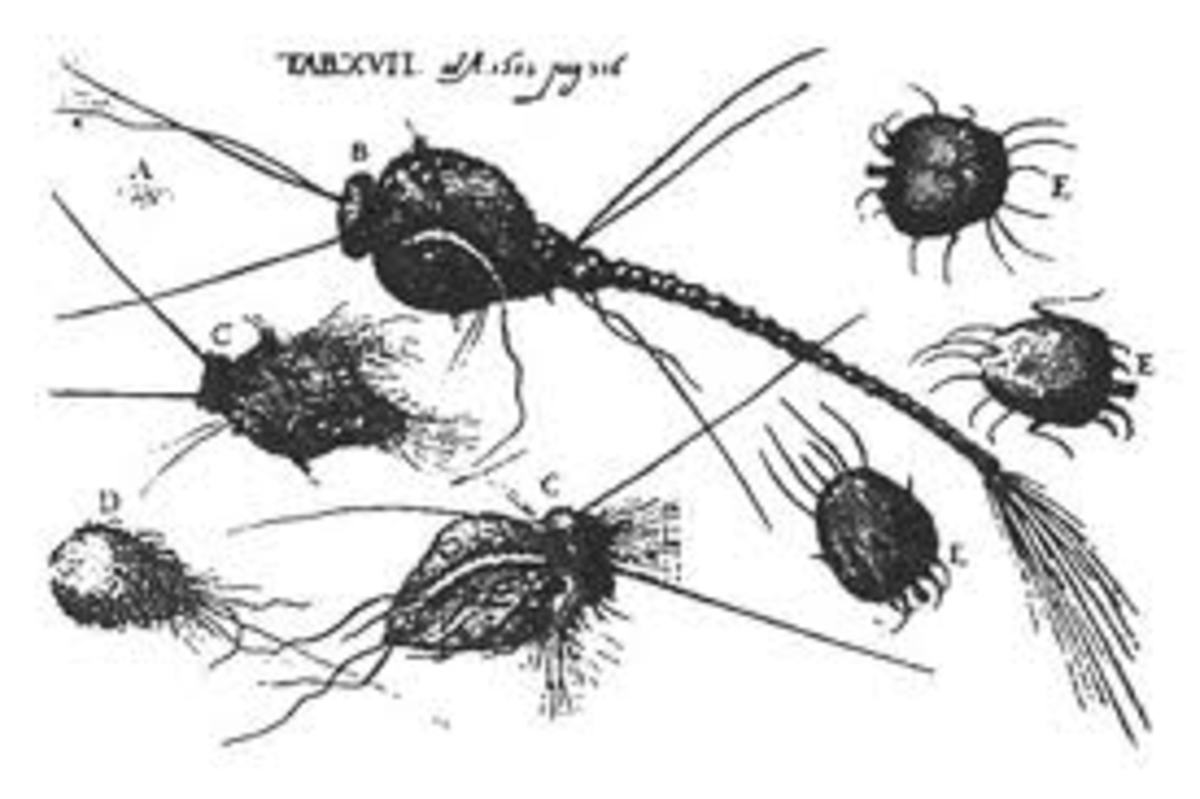 Creatures found under the skin of sufferer's with Morgellon's disease.