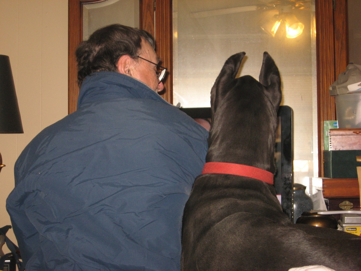 Regardless of the love and care they receive, my Great Danes will never live to be twenty years old.