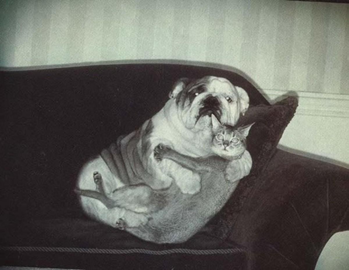 scared dog cuddles cat