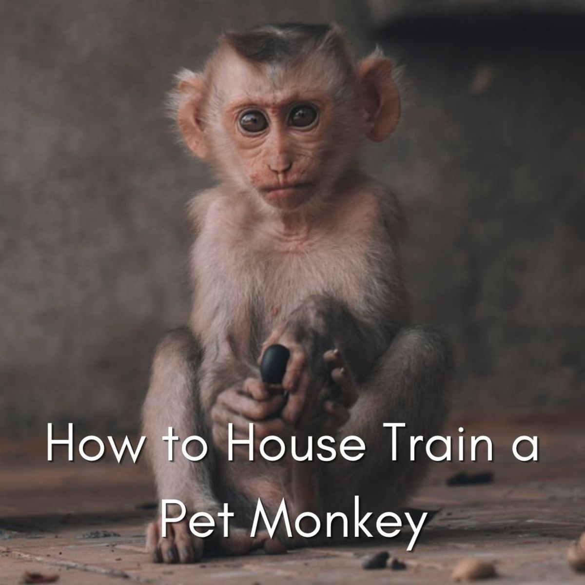 With a lot of effort, you can house train some monkeys.