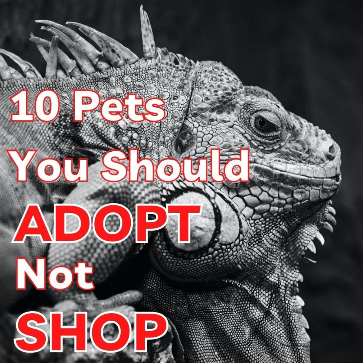 Many common species of pets, both domesticated and exotic, are over-bred because of the demand created by impulse buyers. That's why it's better to adopt instead of buy them.