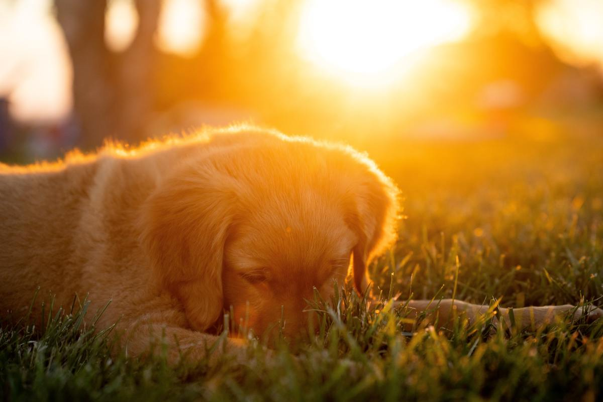 Canine epilepsy does not always have to be treated.