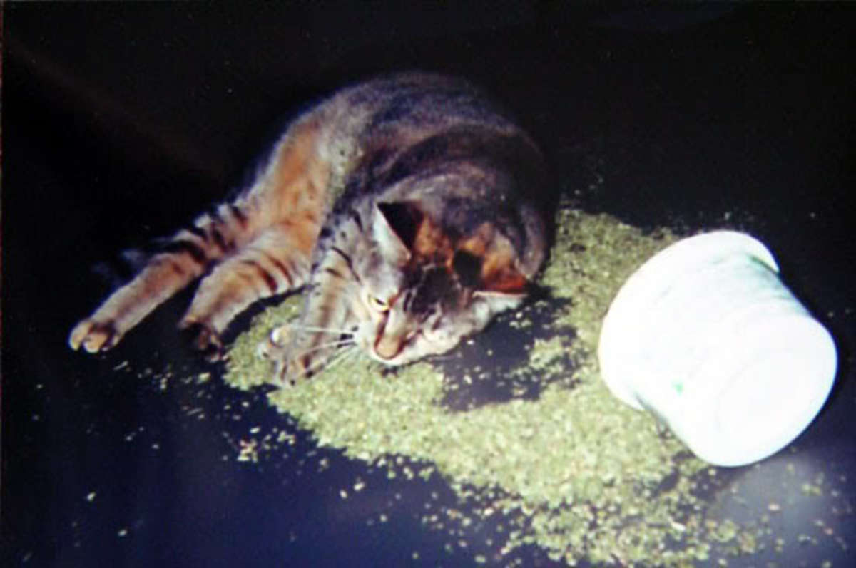 You might want to talk to your cat about catnip.