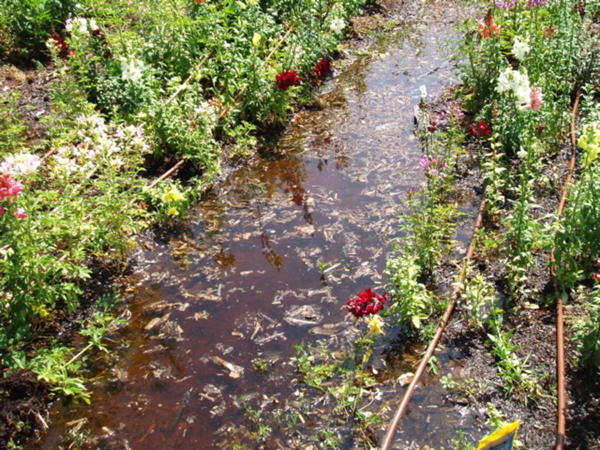Irrigation Water Soaking Down