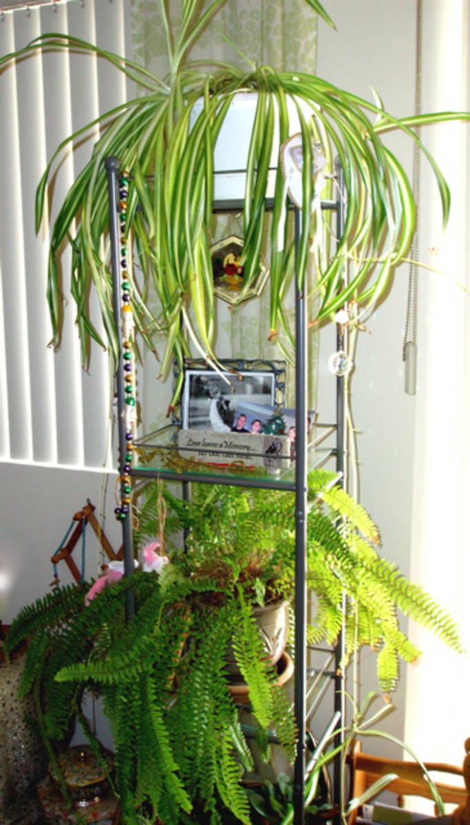 Indoor plants help moisten and clean the air inside your home.