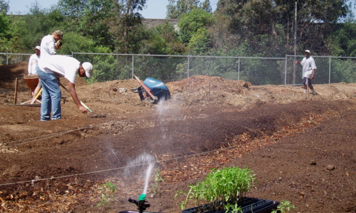 Water helps soften the soil prior to planting. It also softens protective seed covers, so the little sprouts inside the seed can push through and grow.