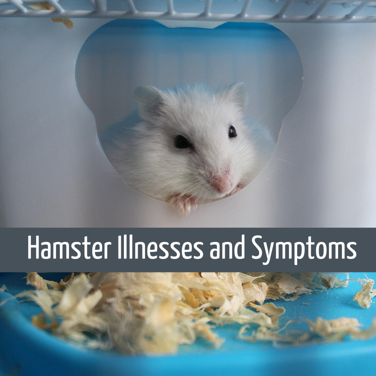 Is My Hamster Sick? Symptoms of Illness or Poor Health