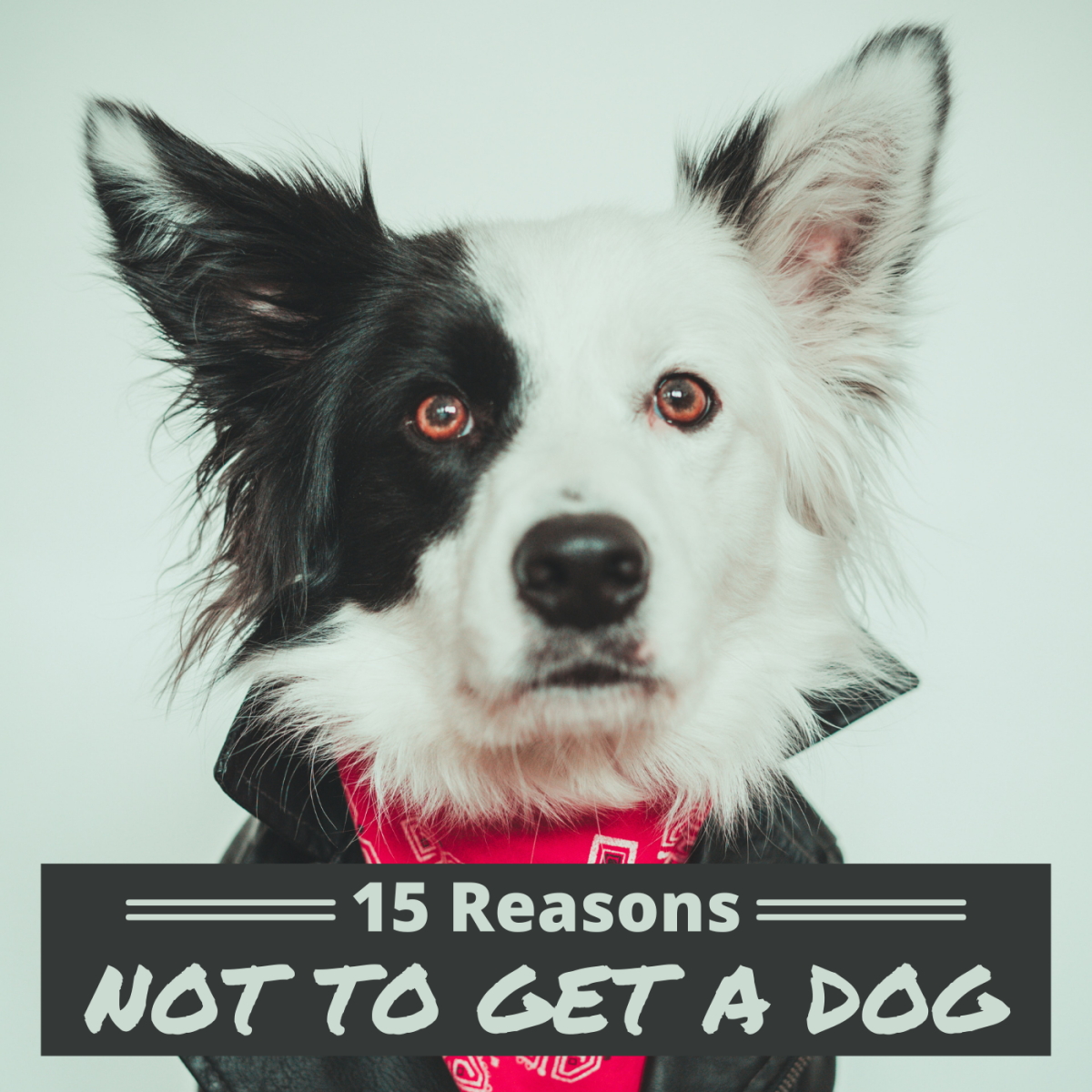 Dogs can make great pets, but there are a number of downsides and challenges that you should consider before deciding to bring one into your life.