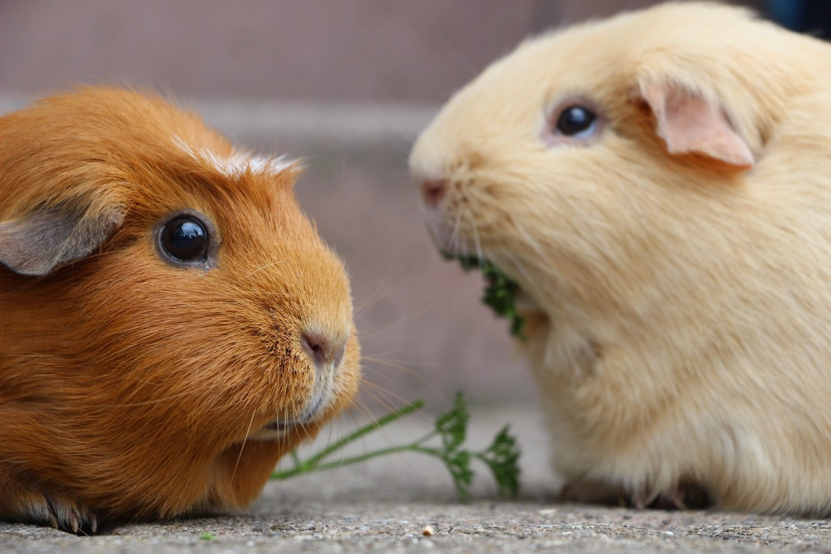 How about Cayenne and Mustard for this cute pair?