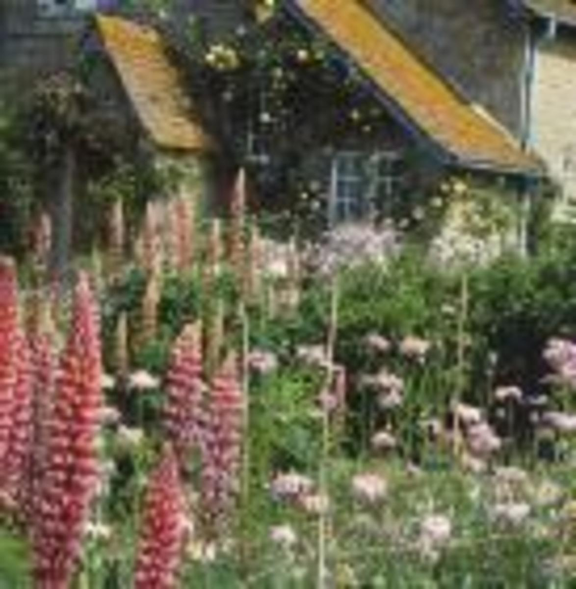 Planting in swathes softens the look of a cottage garden