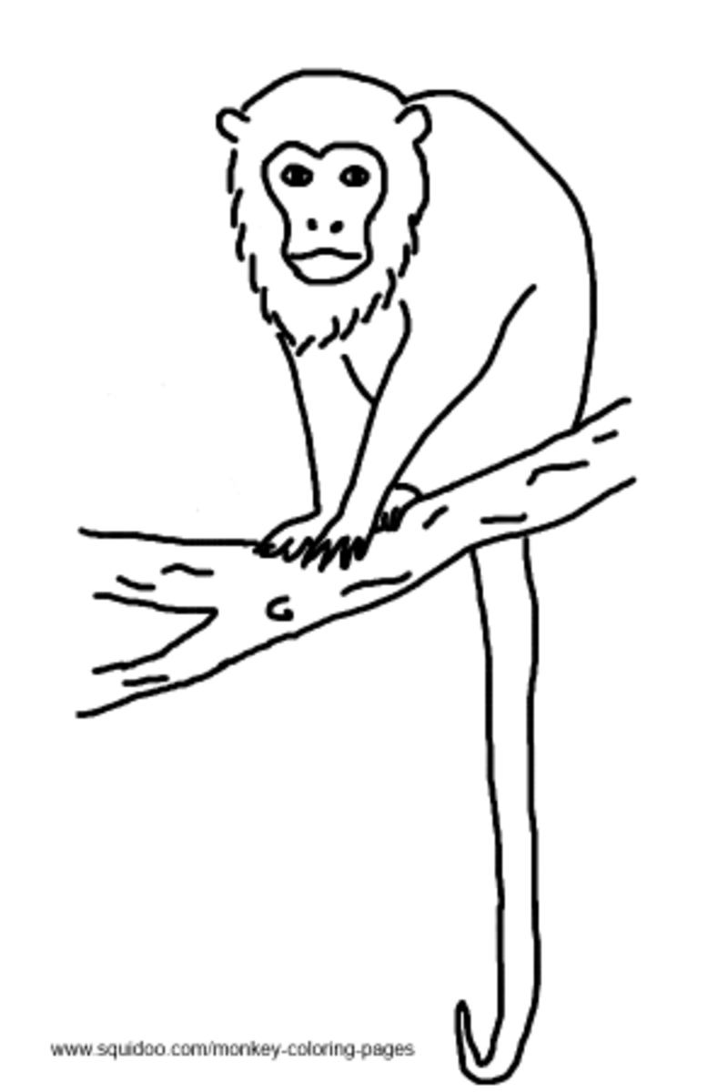 Get Free High Quality HD Wallpapers Colobus Monkey Coloring Page
