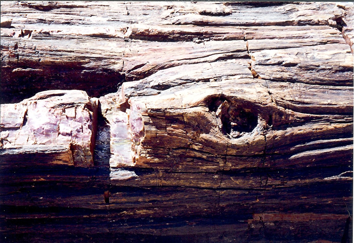 Close-up of petrified log